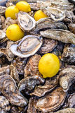 Fresh oysters on the counter. Fresh oysters and lemons on the counter of a street vendor stock images