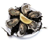 Fresh oysters. Dish of fresh oysters with lemon Royalty Free Stock Photos
