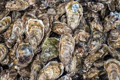 Fresh oysters at the fish market Royalty Free Stock Photos