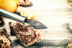 Fresh oysters with fresh lemon. Food background Stock Images