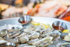 Fresh Oysters on the Half Shell Stock Images