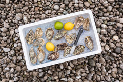 Fresh oysters on ice Stock Photos