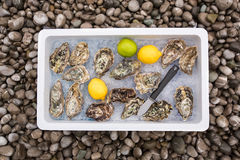 Fresh oysters on ice Stock Photo