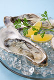 Fresh Oysters on Ice Stock Photography