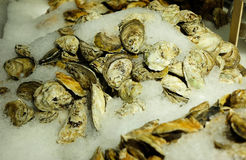 Fresh oysters on Ice. At fish market Stock Photos
