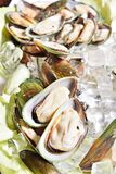 Fresh oysters on the ice Stock Photo