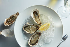 Fresh oysters on ice with lemon Stock Photos