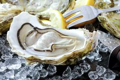 Fresh oysters with ice and lemon royalty free stock photo
