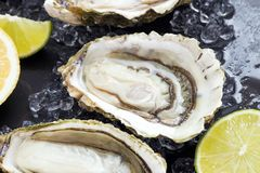Fresh oysters with ice and lemon stock images