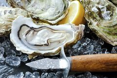 Fresh oysters with ice and lemon royalty free stock image