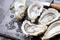 Fresh oysters with ice and lemon royalty free stock images