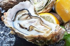Fresh oysters with ice and lemon. Opened fresh oysters with ice and lemon slice on black slate background royalty free stock photo