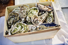 Fresh oysters on ice at an outdoor cafe. Stock Image