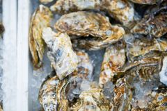 Fresh oysters on ice for sale in Kuromon Ichiba Market Royalty Free Stock Images
