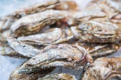Fresh oysters on ice for sale in Kuromon Ichiba Market Royalty Free Stock Photo