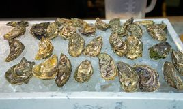 Fresh oysters on ice for sale at a seafood market stock photo