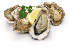 Fresh oysters. Isolated on white background Royalty Free Stock Images