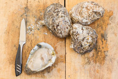 Fresh oysters and knife on wooden board Stock Photo
