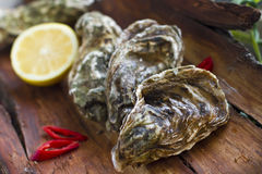 Fresh oysters with lemon and chili pepper. Fine de claire French oysters with lemon on the wooden texture Royalty Free Stock Photography