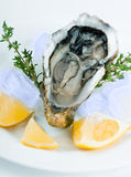 Fresh oysters Stock Photos