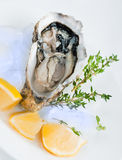 Fresh oysters with lemon Royalty Free Stock Images