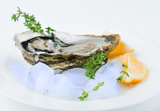 Fresh oysters Royalty Free Stock Photography