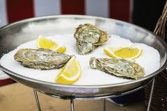 Fresh oysters and lemon on ice in plate close-up. Gastronomic gourmet dainty products on market counter, real scene in. Fresh oysters and lemon on ice in metal Royalty Free Stock Photo