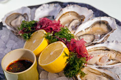 Fresh oysters with  lemon on ice plate. Dozen delicious raw oysters laid out on ice Royalty Free Stock Images