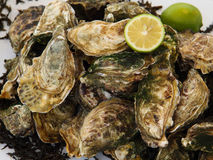 Fresh Oysters and lemon. Royalty Free Stock Photography