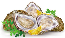 Fresh oysters with lemon Royalty Free Stock Photo