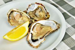 Fresh oysters with lemon Stock Photos