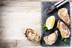 Fresh oysters with lemon on stone plate. Food background. With copy space Royalty Free Stock Photography