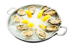 Fresh oysters with lemon wedge Royalty Free Stock Photography