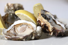 Fresh oysters with lemon Stock Images