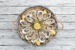 Fresh oysters with lemon in Wooden Box. On a white wooden background. Top view. Free copy space royalty free stock photography