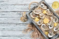 Fresh oysters with lemon in Wooden Box. On a white wooden background. Top view. Free copy space royalty free stock image