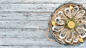 Fresh oysters with lemon in Wooden Box. On a white wooden background. Top view. Free copy space stock image