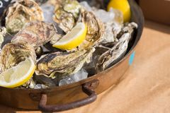Fresh oysters lie on tray with ice lemon. Fresh oysters on tray with ice and lemon pieces. Delicious seafood stock images