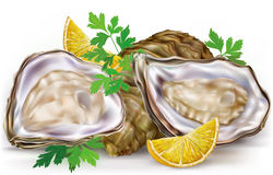 Fresh oysters with lime. Fresh opened oyster and lemon on white background Royalty Free Stock Photo