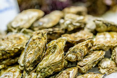 Fresh oysters on market display. Fresh oysters on cooled market display royalty free stock photography