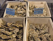 Fresh oysters. . French cuisine. The market in France. Stock Photos