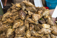 Fresh oysters at a market Royalty Free Stock Photos