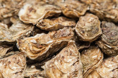 Fresh Oysters in market, selective focus Royalty Free Stock Photos
