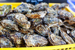 Fresh oysters on mediterranean street market. Stock Photography
