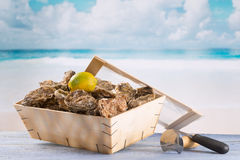 Fresh oysters Royalty Free Stock Photo