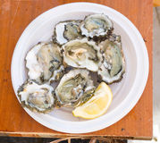Fresh oysters. Stock Photos