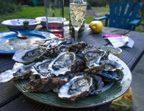 Fresh Oysters. On the plate Stock Images