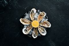 Fresh oysters in a plate of ice and lemon. Seafood. Top view. Free copy space stock image
