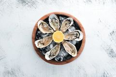 Fresh oysters in a plate of ice and lemon. Seafood. Top view. Free copy space stock photography
