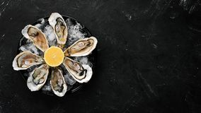 Fresh oysters in a plate of ice and lemon. Seafood. Top view. Free copy space royalty free stock images